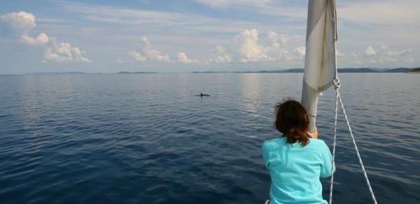 Segeln mit Delphinen